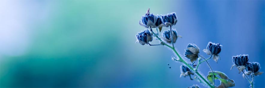 Flowers-Blue-Plant-Nature-900x1440.jpg